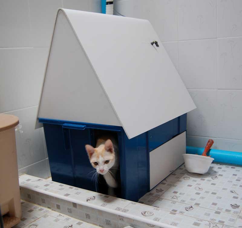ขั้นตอนการสร้างห้องน้ำแมว