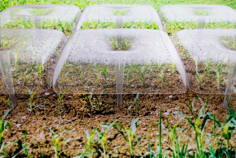 Agrodome โมดูลพลาสติกรีไซเคิล สร้างสภาพแวดล้อมแบบเรือนกระจกสำหรับพืช